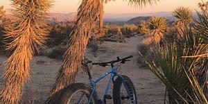 bike resting on tree on desert trail