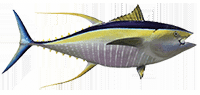 35d5e428 Yellowfin Tuna Intro (1)